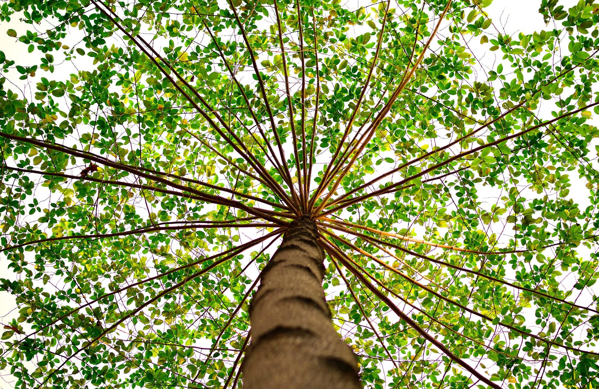 parquet ecologie durable arbre
