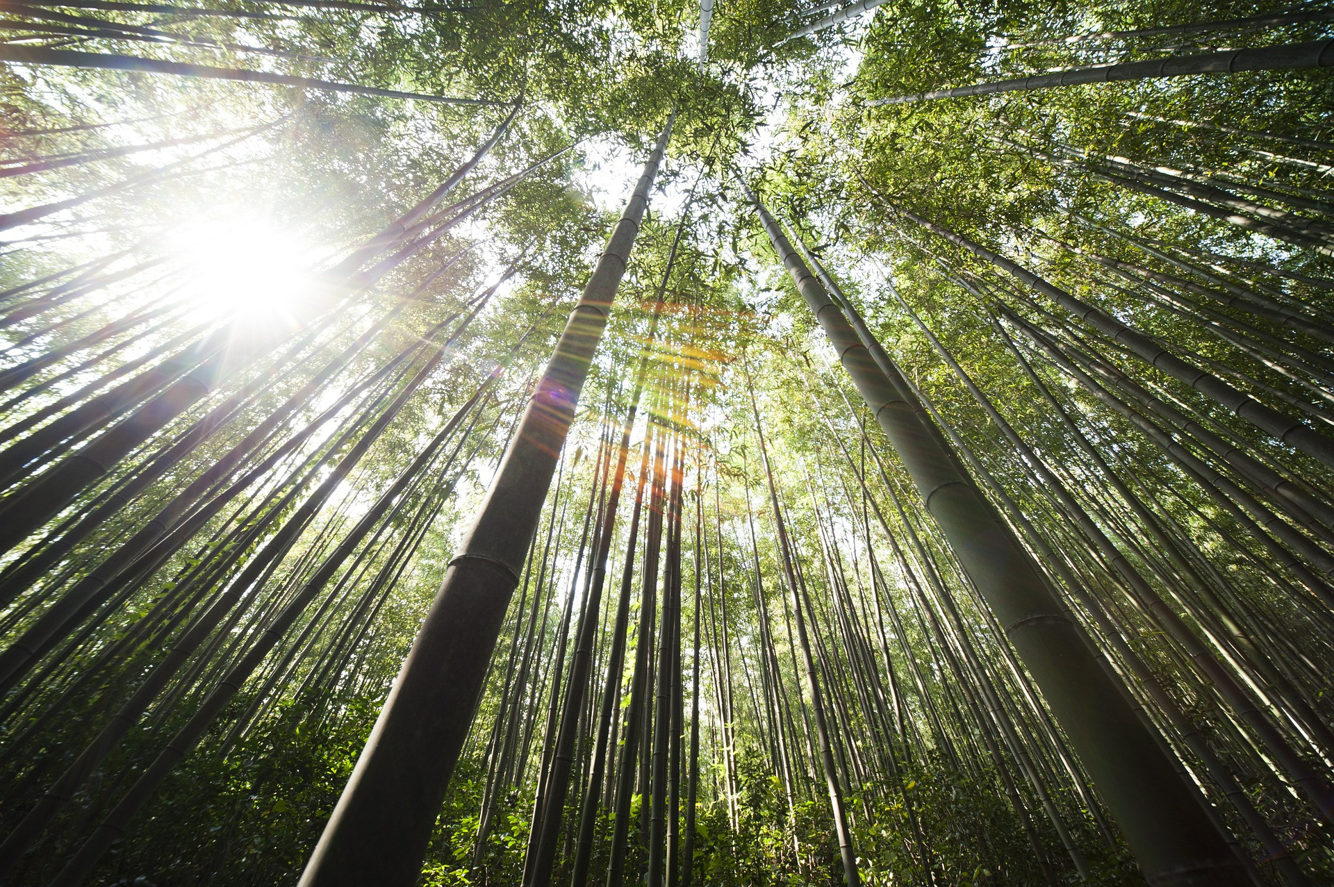 Un parquet en Bambou chez vous